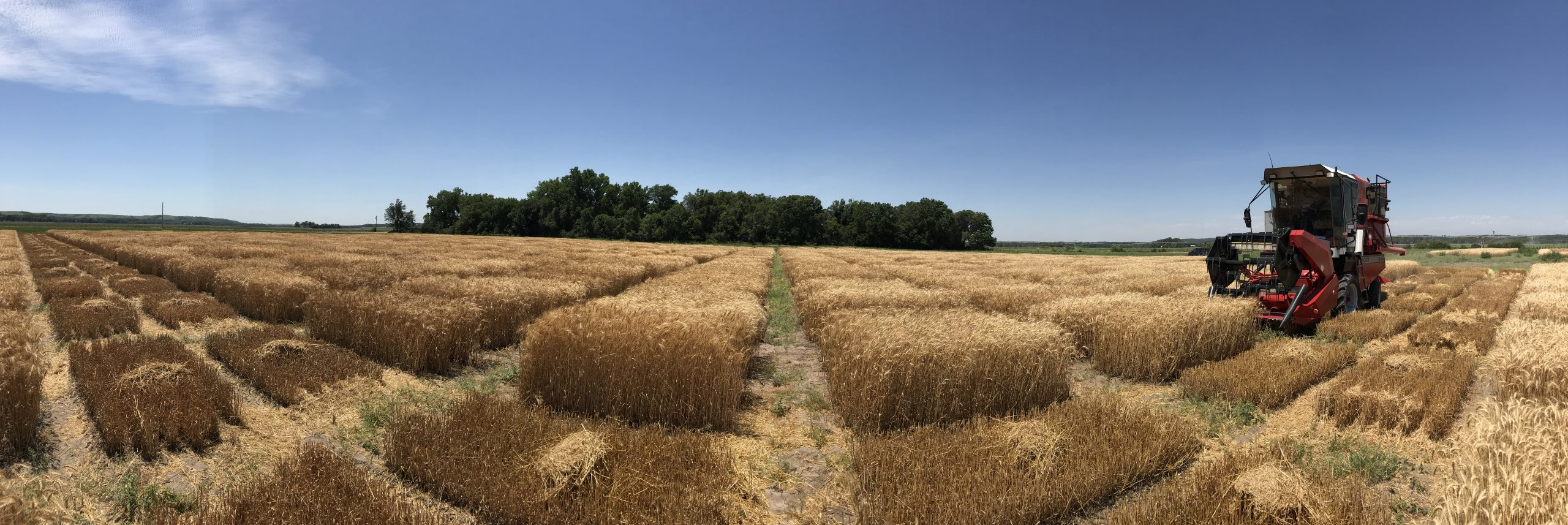 Nearly $1 million grant to help university researchers develop prediction models for determining best new winter wheat varieties